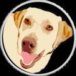 McKenzie -Labrador Retriever